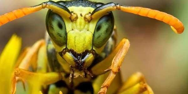 Сообщения по поводу укусов пчел и ос – медработники скорой Горишних Плавней фиксируют ежедневно.