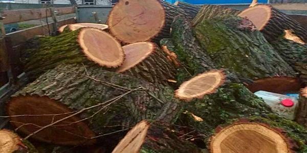 У Кременчуцькому районі впіймали двох нелегальних лісорубів із вантажівкою дров