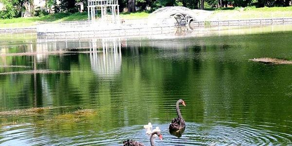 Директор проанонсував найближче поповнення парку відпочинку новими мешканцями.