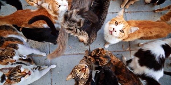 В горисполкоме хозяйку 9 кошек решили пощадить