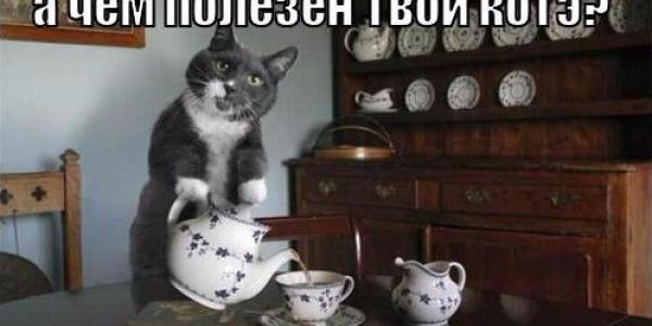 Хозяйка 9 кошек, живущих в её квартире, не находит взаимопонимания с соседями