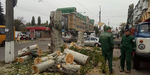 «Благоустрій Кременчука» просить мільйон гривень, аби ще попиляти і порубати