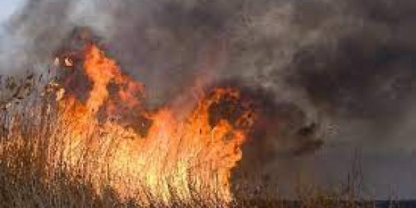 Під Кременчуком масштабні пожежі: горів очерет і суха трава