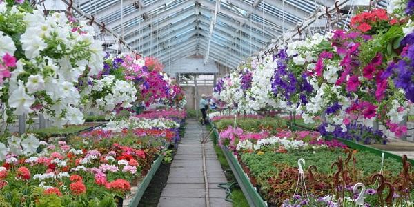 Цьогоріч на мільйони гривень розквітнуть «квіти Погрібного» у Харкові та Києві