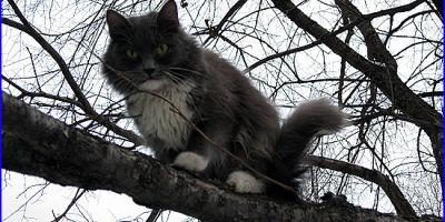 В Кременчуге возле рынка «Плеяда» на дереве застрял кот