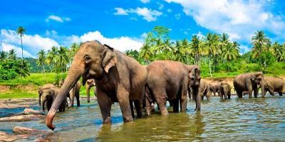 Малецкий в отпуске ездил к слонам