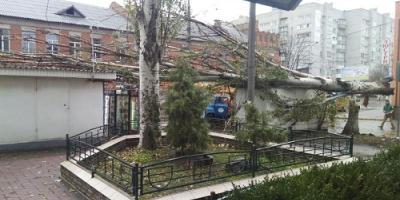 В Кременчуге шквальным ветром повалило 26 деревьев и 50 больших веток