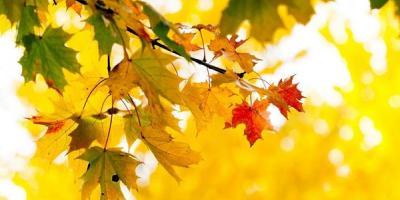 Осень-2018: два бабьих лета, заморозки в октябре и первый снег в ноябре