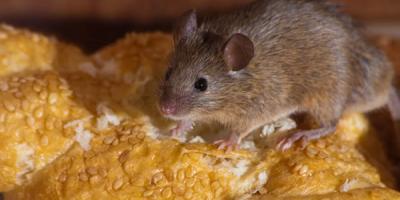 Как в киоске по выпечке бегают мыши – соцсети