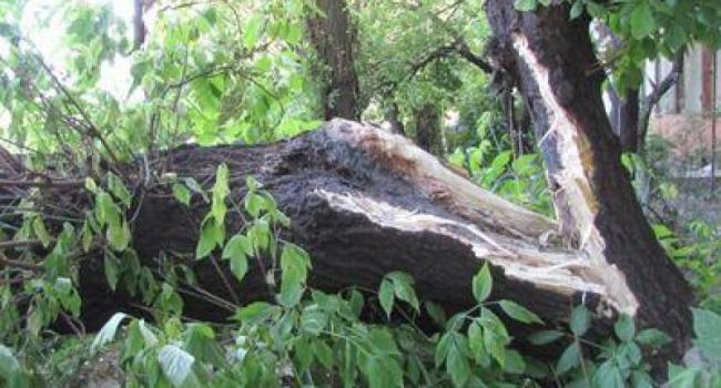 Коммунальщики убирают завалы веток и деревьев после урагана