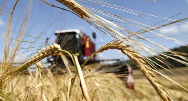 На Полтавщине урожай ранних зерновых оказался на 10% меньше, чем в прошлом году