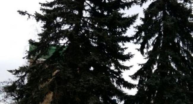 40-летнюю елку возле политеха могут спилить