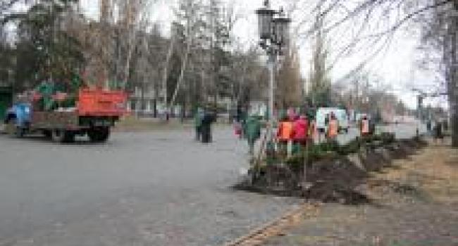 Коммунальщики на бульваре Пушкина высаживают вечнозеленые кусты