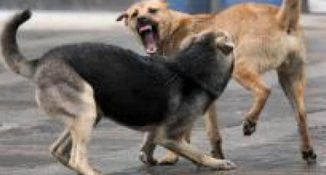 В центре Кременчуга бродячие собаки покусали сразу несколько человек