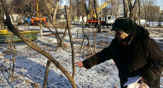 В центре Кременчуга скандал из-за кронирования деревьев