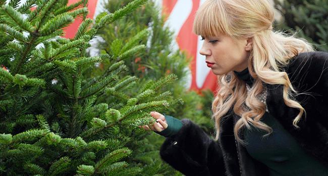 В Кременчуге появились вредные елки