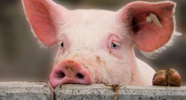 АЧС поряд: кремечужанам не рекомендують купувати м'ясо та м'ясні вироби на ринках