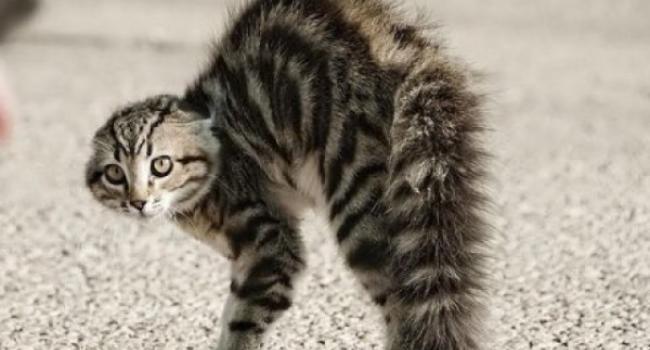 Під Кременчуком у загиблого кота виявили сказ