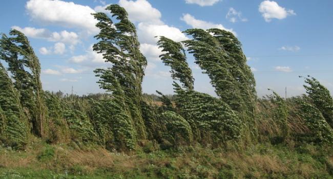 Завтра в Кременчуці прогнозують шквальний вітер