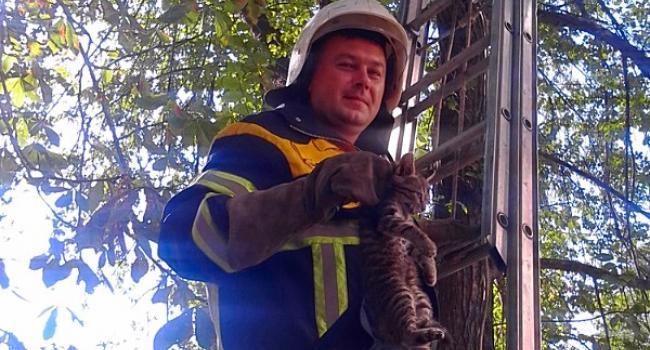 Кременчуцькі пожежні врятували кота і нерви мешканців будинку