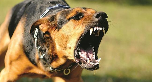 У Кременчуцькому районі в дворі пацієнта фельдшерку покусав собака