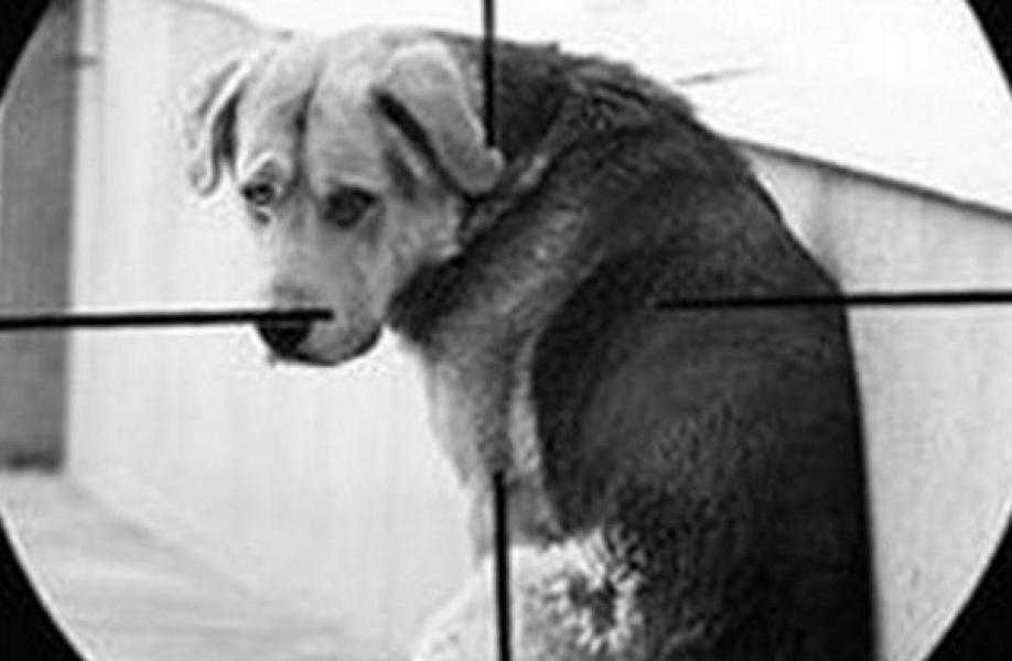 В Кременчуге неизвестные травят собак