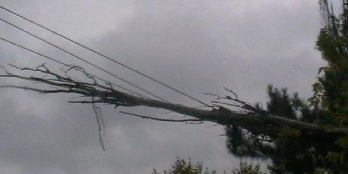 В Кременчуге на выходных убирали сломанные ветром деревья
